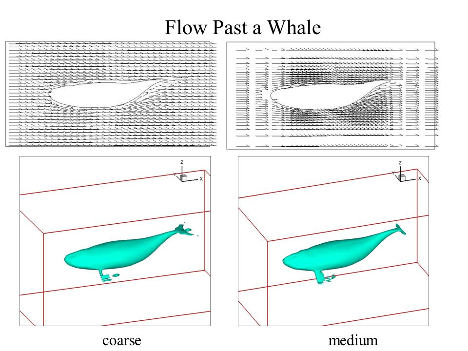 Flow Past a Whale coarse medium