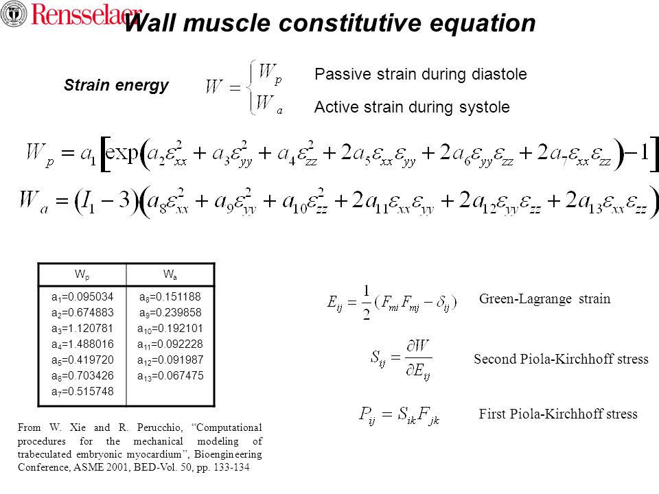 Wall muscle constitutive equation