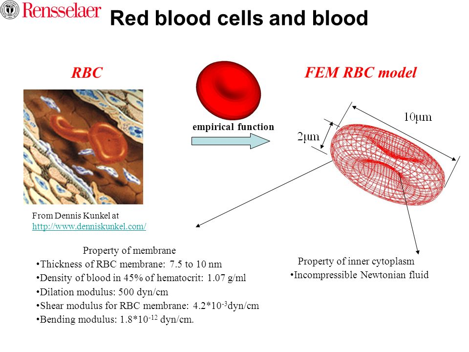 Red blood cells and blood