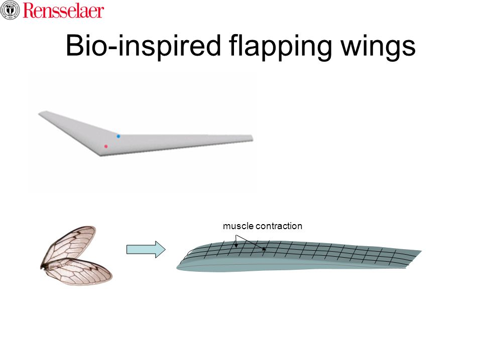 Bio-inspired flapping wings