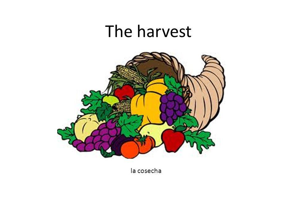The harvest la cosecha