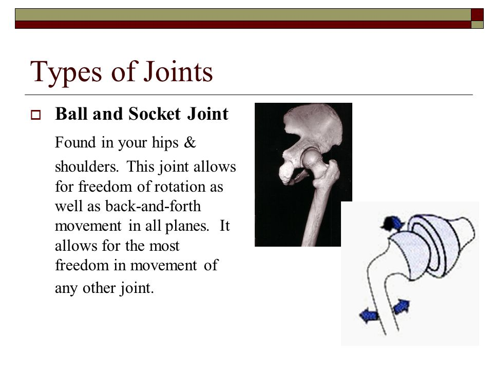 Types of Joints Ball and Socket Joint Found in your hips &