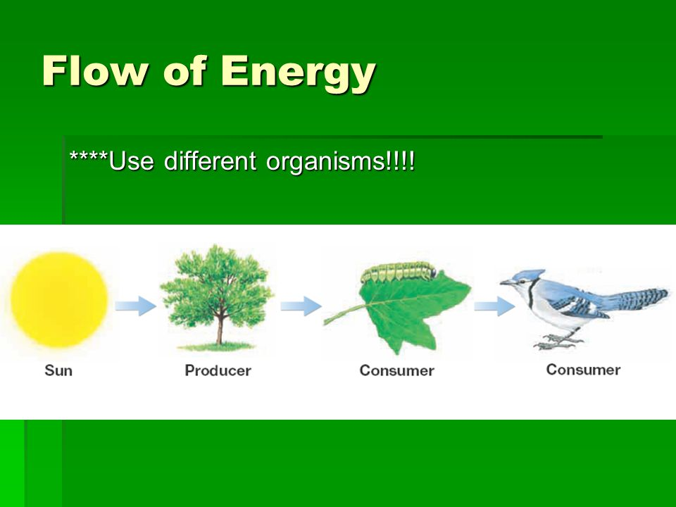energy flow among organisms of a The flow of energy: these efficiencies vary among organisms we know from our understaning of energy flow in natural systems that ecological.