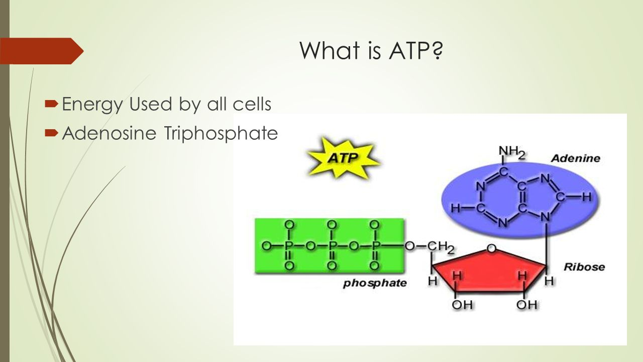 all about atp Transcript of why do cells use atp what is atp how is energy produced from atp energy is released when atp breaks a bond and releases a phosphate group the bonds between the second and third phosphate groups are described as high energy bonds when they are broken about 73 kcal/mol are.