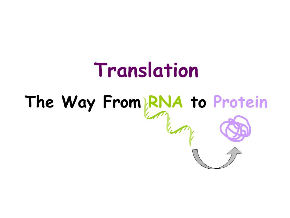Translation The Way From RNA to Protein