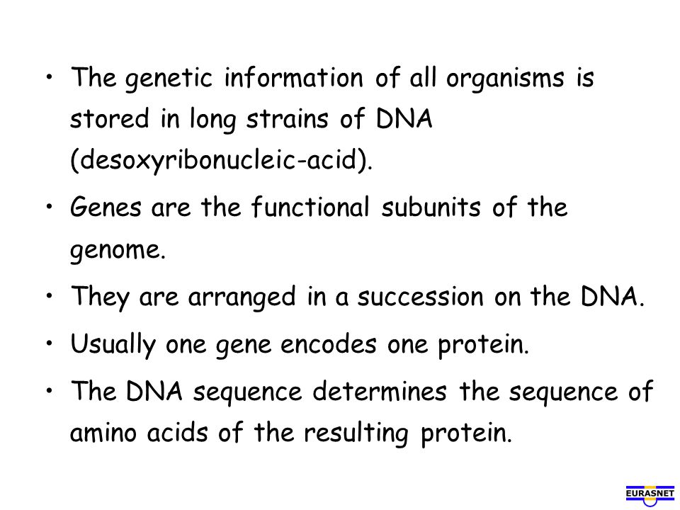 The genetic information of all organisms is stored in long strains of DNA (desoxyribonucleic-acid).