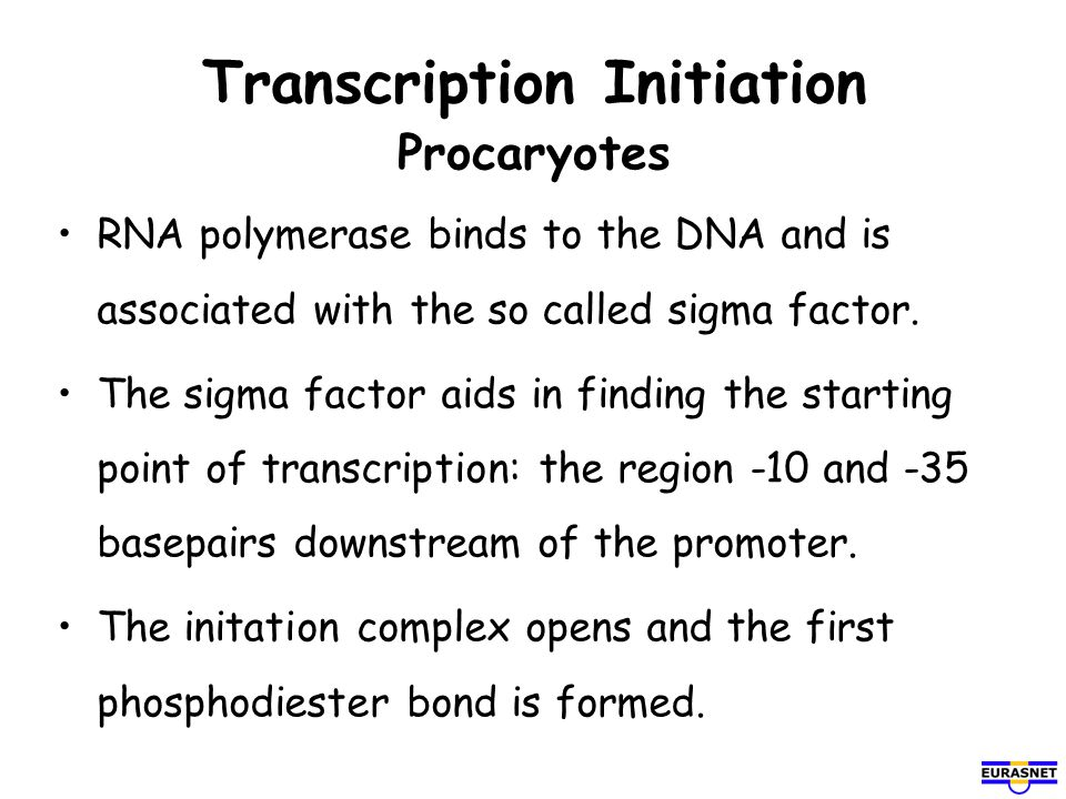 Transcription Initiation Procaryotes