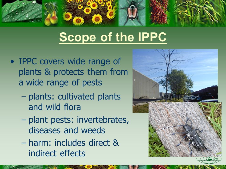 Day One 3/28/2017. Scope of the IPPC. IPPC covers wide range of plants & protects them from a wide range of pests.