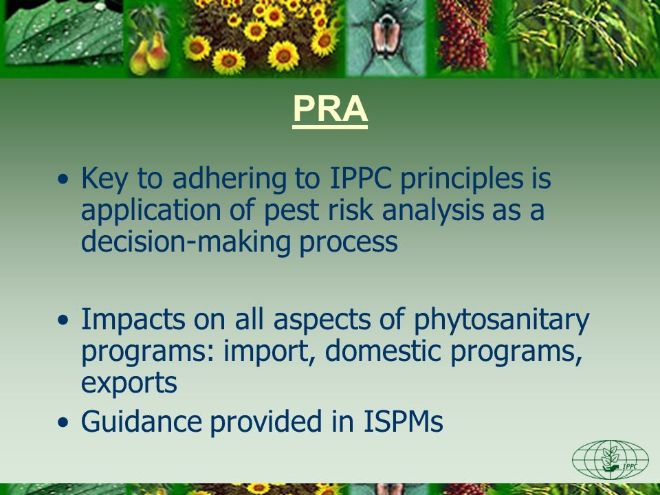 Day One 3/28/2017. PRA. Key to adhering to IPPC principles is application of pest risk analysis as a decision-making process.
