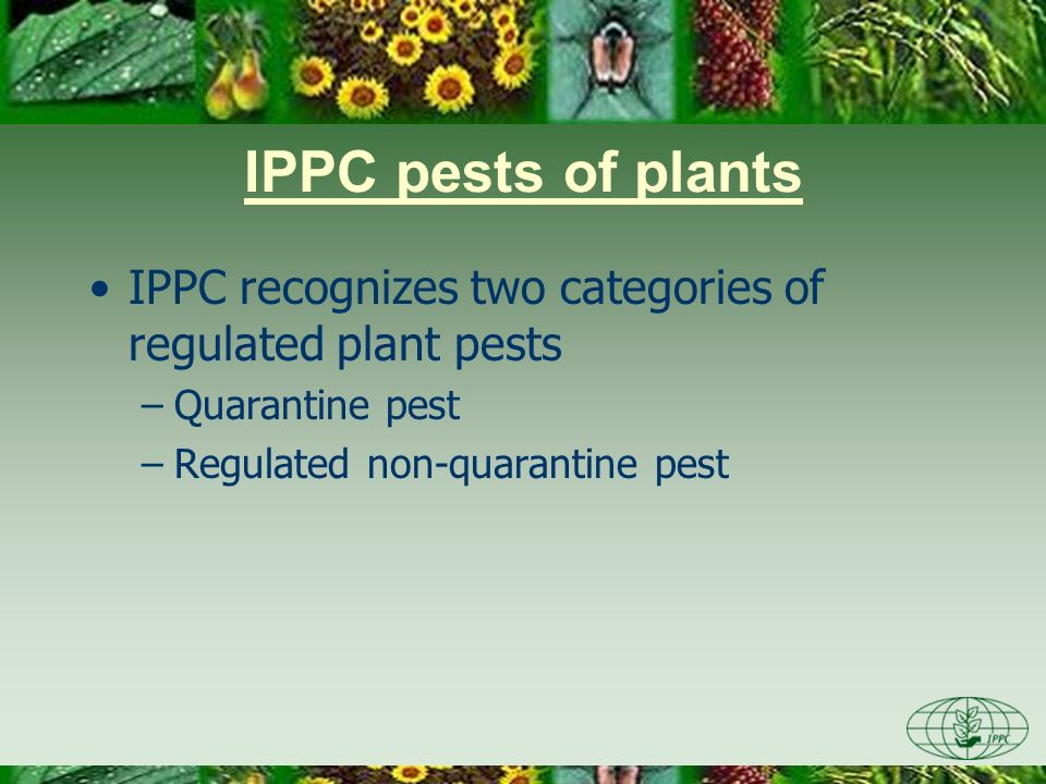 Day One 3/28/2017. IPPC pests of plants. IPPC recognizes two categories of regulated plant pests.