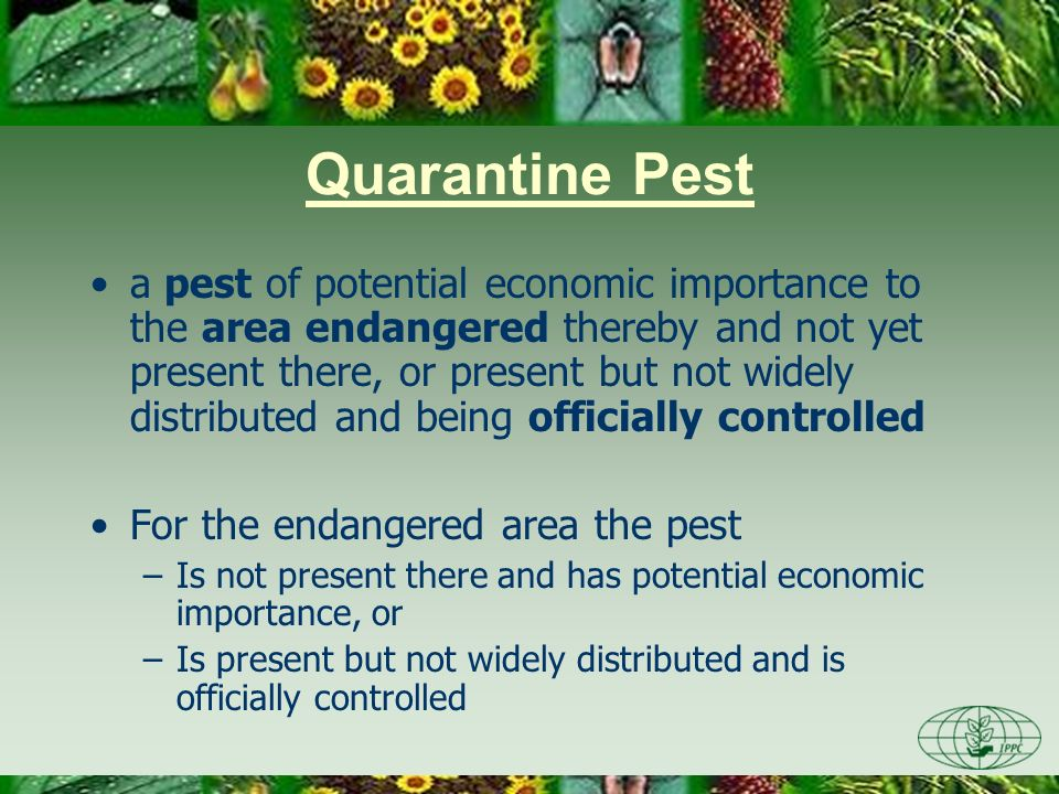 Day One 3/28/2017. Quarantine Pest.