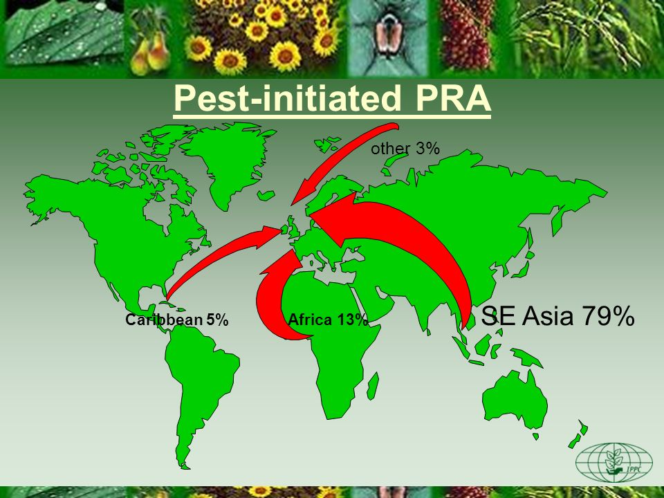 Pest-initiated PRA SE Asia 79% other 3% Caribbean 5% Africa 13%
