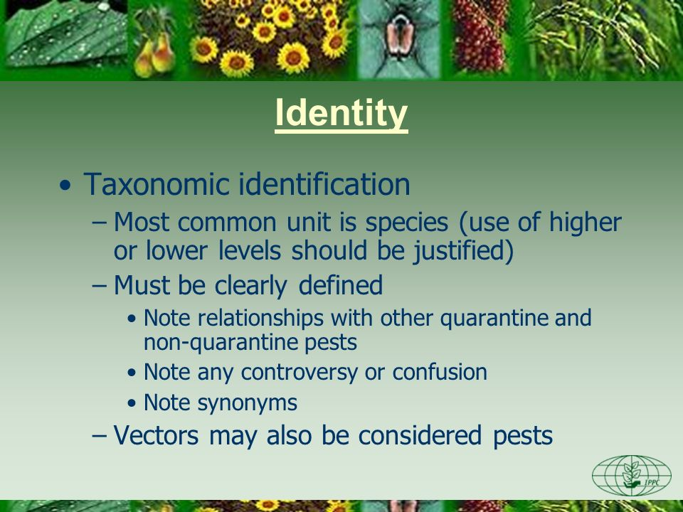 Identity Taxonomic identification