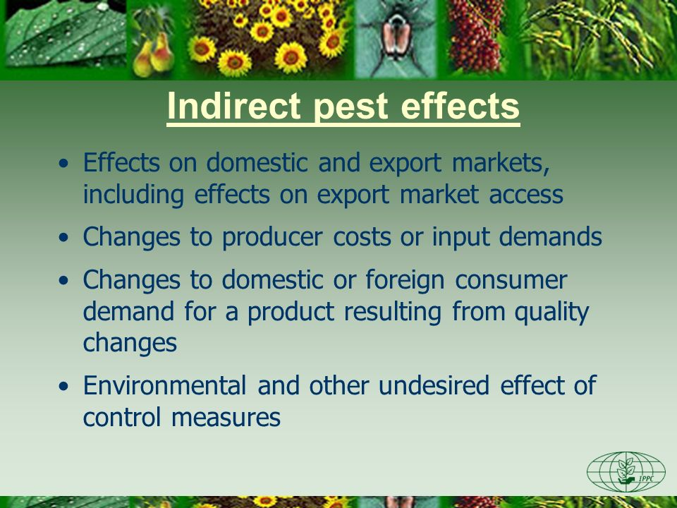 Day Three 3/28/2017. Indirect pest effects. Effects on domestic and export markets, including effects on export market access.
