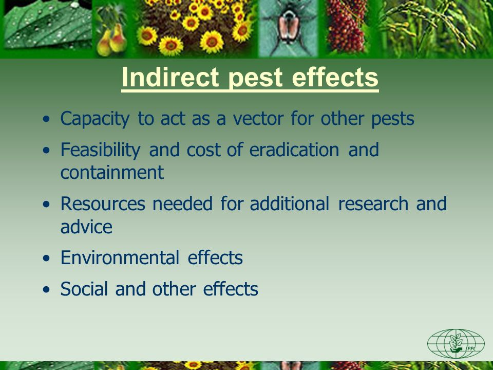 Indirect pest effects Capacity to act as a vector for other pests