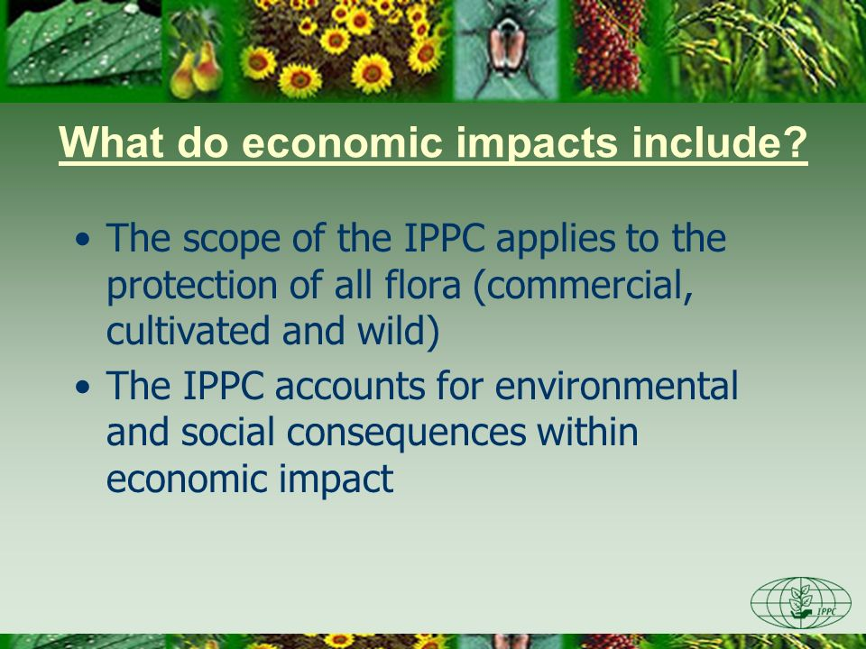 What do economic impacts include