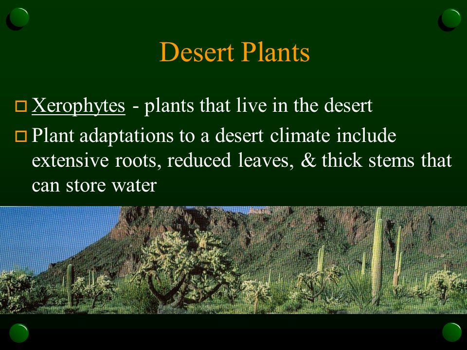 Desert Plants Xerophytes - plants that live in the desert