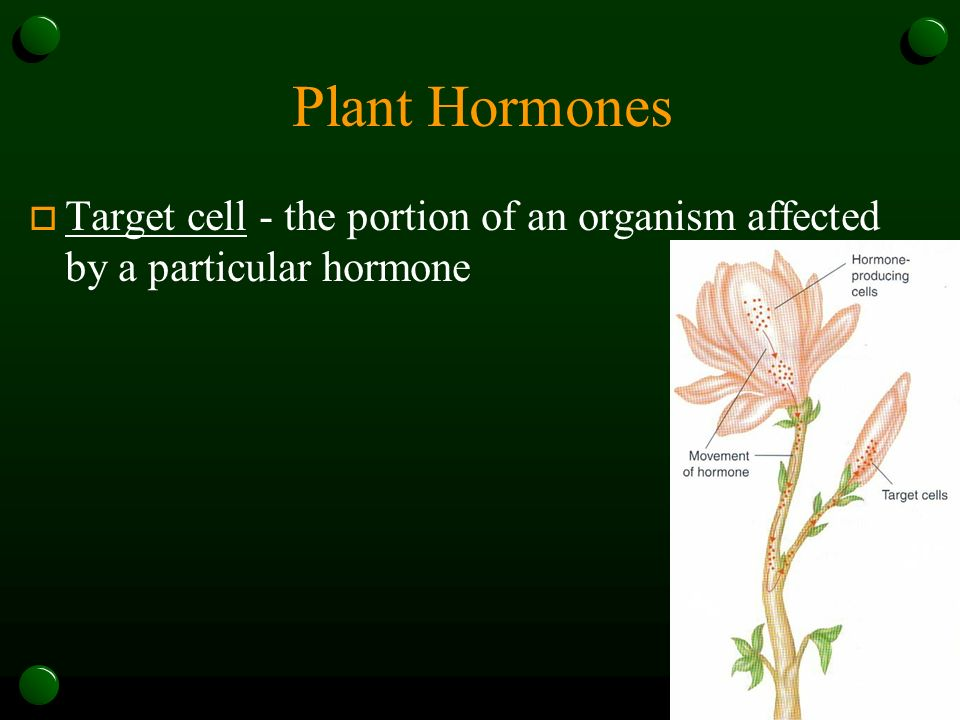 Plant Hormones Target cell - the portion of an organism affected by a particular hormone