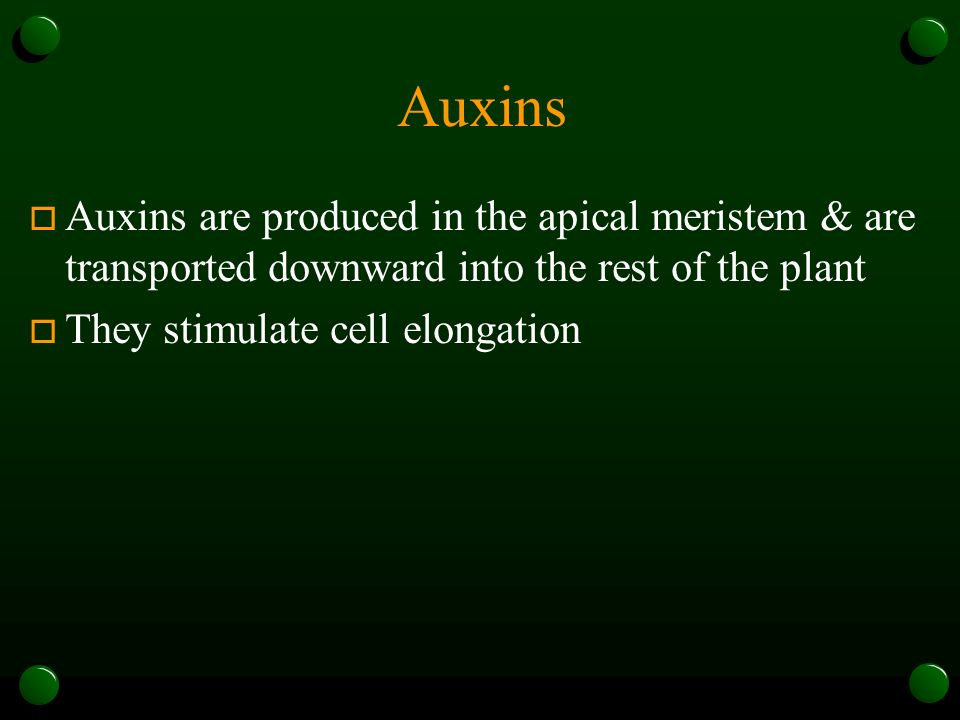 Auxins Auxins are produced in the apical meristem & are transported downward into the rest of the plant.