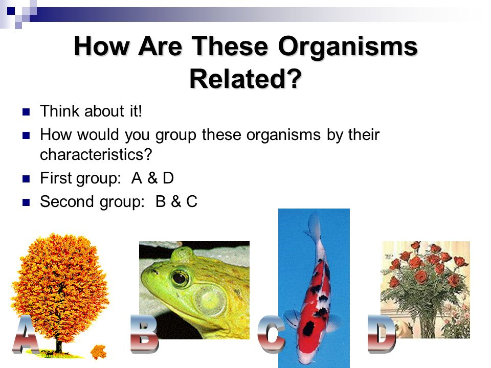 How Are These Organisms Related