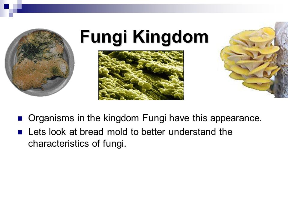 Fungi Kingdom Organisms in the kingdom Fungi have this appearance.
