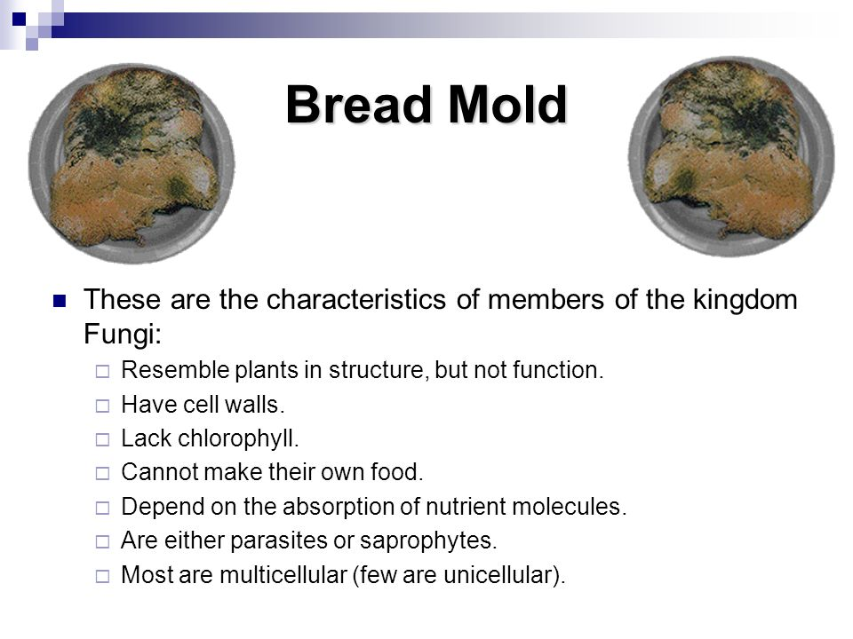 Bread Mold These are the characteristics of members of the kingdom Fungi: Resemble plants in structure, but not function.
