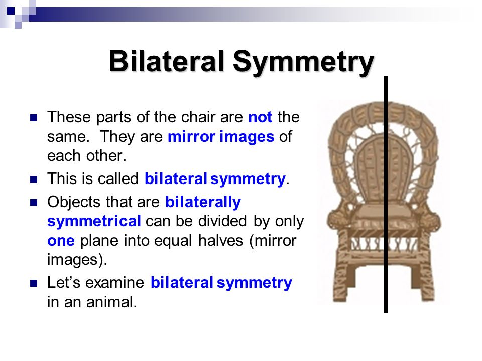 Bilateral Symmetry These parts of the chair are not the same. They are mirror images of each other.