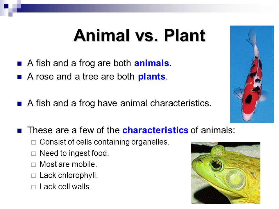 Animal vs. Plant A fish and a frog are both animals.