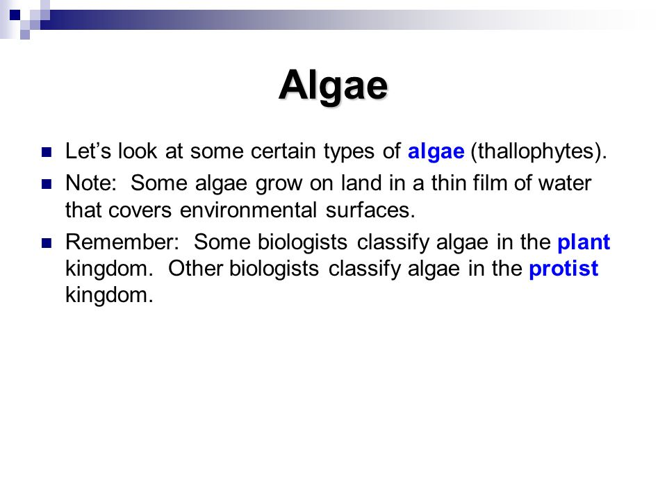 Algae Let's look at some certain types of algae (thallophytes).