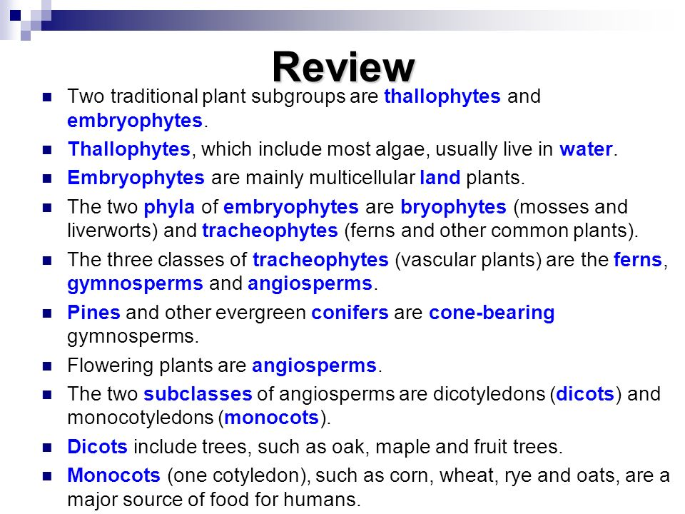 Review Two traditional plant subgroups are thallophytes and embryophytes. Thallophytes, which include most algae, usually live in water.