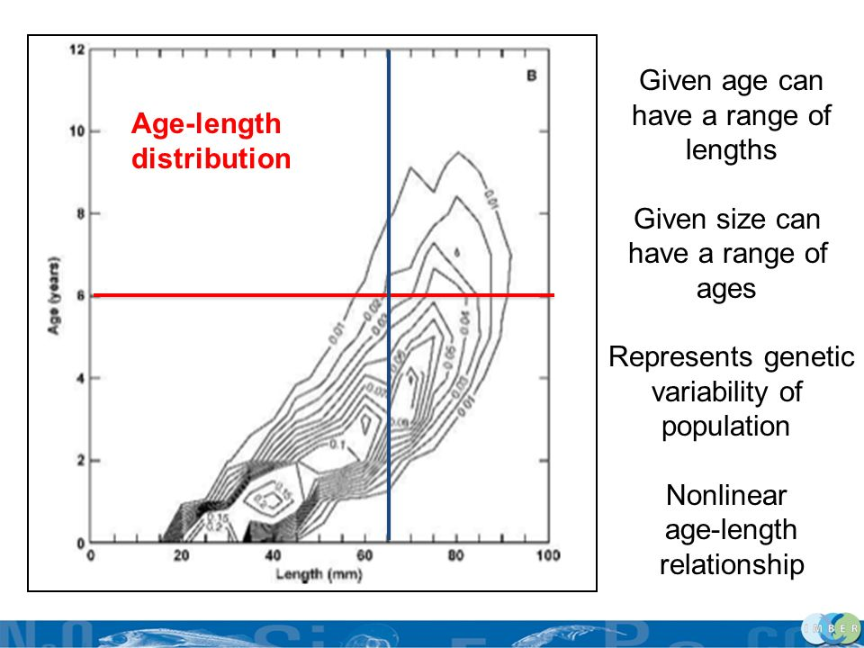 Given age can have a range of. lengths. Given size can. ages. Represents genetic. variability of.