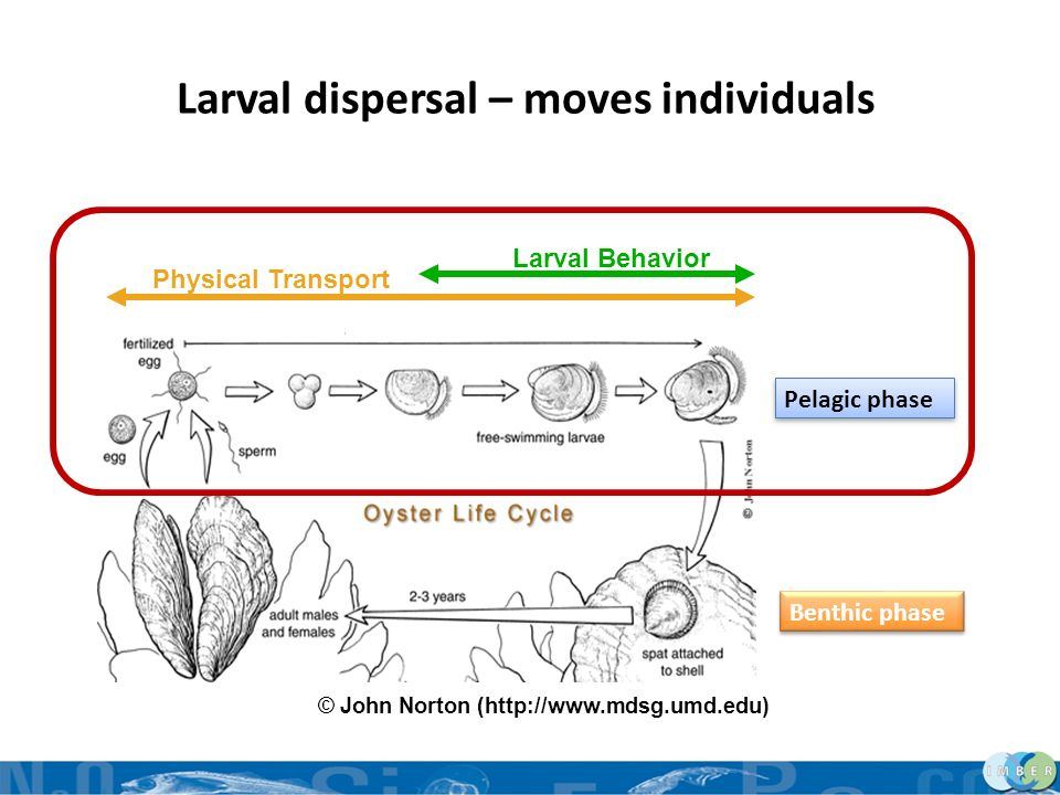 Larval dispersal – moves individuals