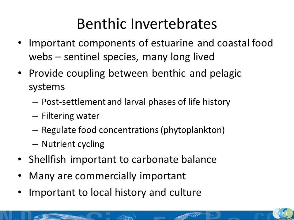 Benthic Invertebrates