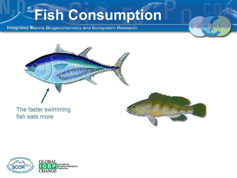 Fish Consumption The faster swimming fish eats more