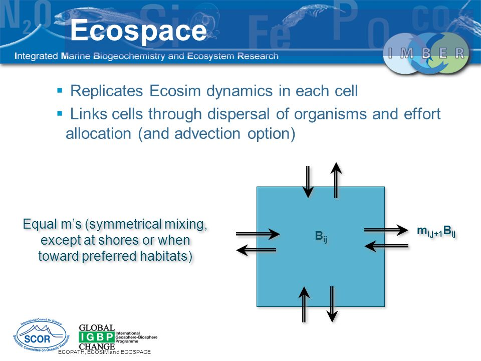 Ecospace Replicates Ecosim dynamics in each cell