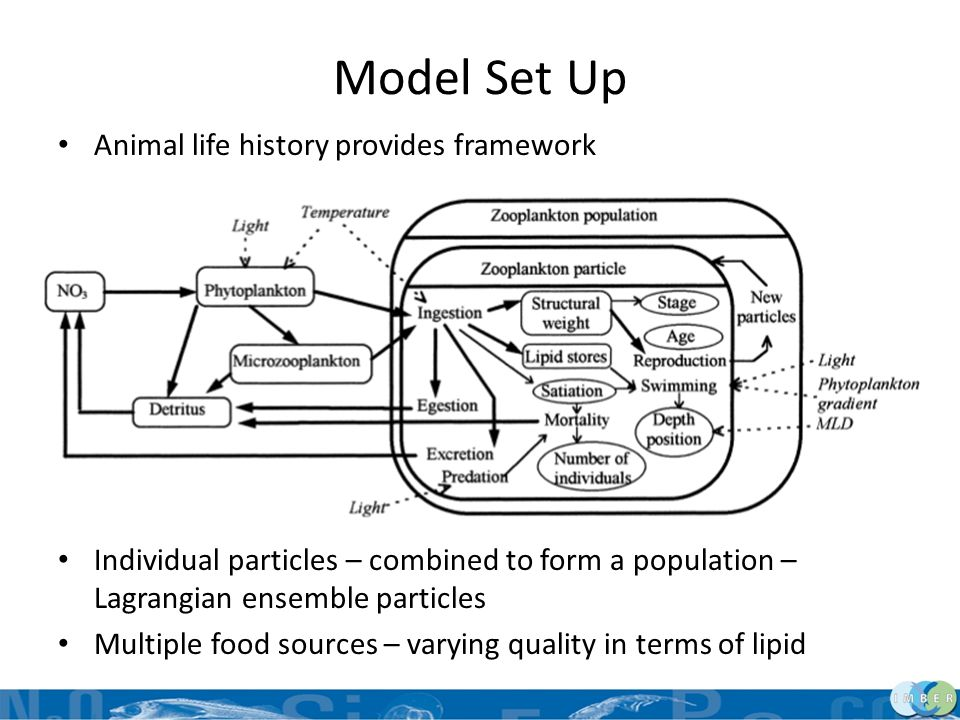 Model Set Up Animal life history provides framework