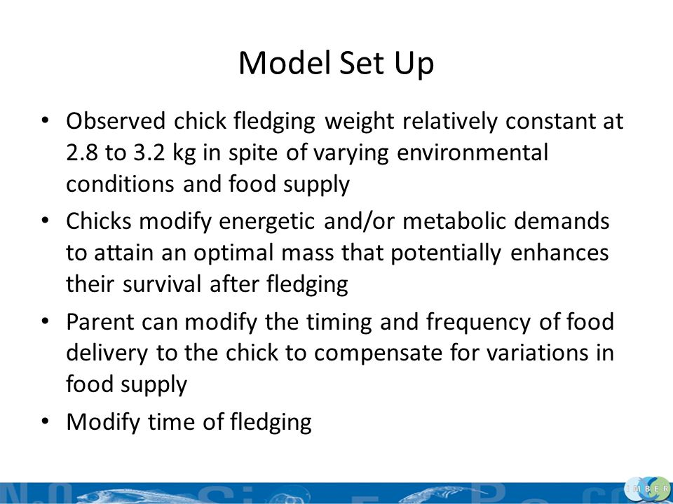 Model Set Up Observed chick fledging weight relatively constant at 2.8 to 3.2 kg in spite of varying environmental conditions and food supply.