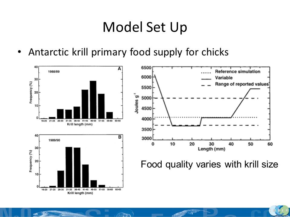 Model Set Up Antarctic krill primary food supply for chicks