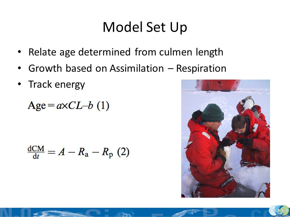 Model Set Up Relate age determined from culmen length