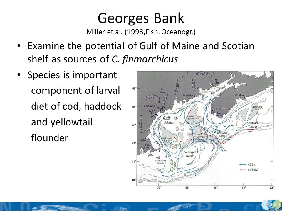 Georges Bank Miller et al. (1998,Fish. Oceanogr.)