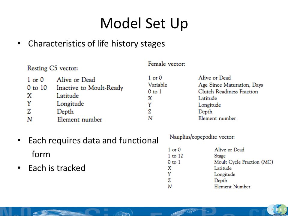 Model Set Up Characteristics of life history stages