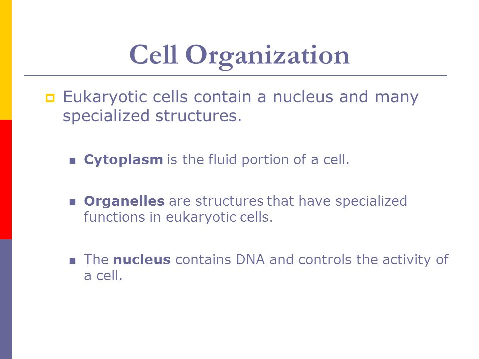 7.2 - Cell Structure P. Smith Bio CP. - ppt download