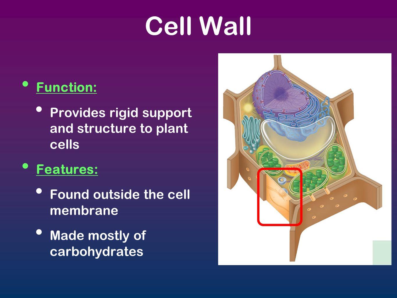 Cells & Organelles. - ppt download