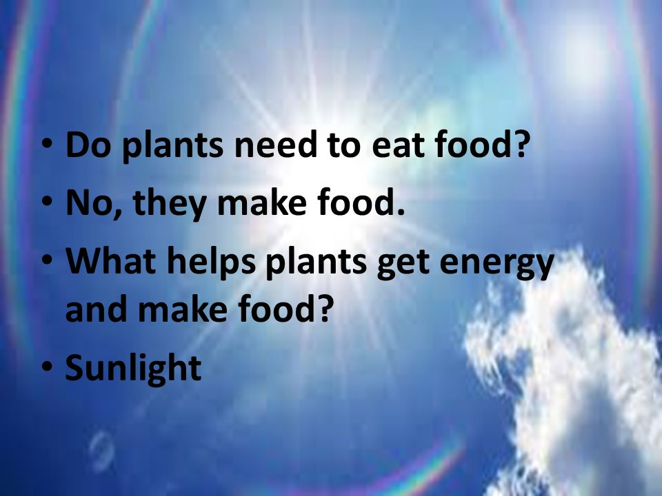 Cells ppt video online download - Plants that need no sunlight ...