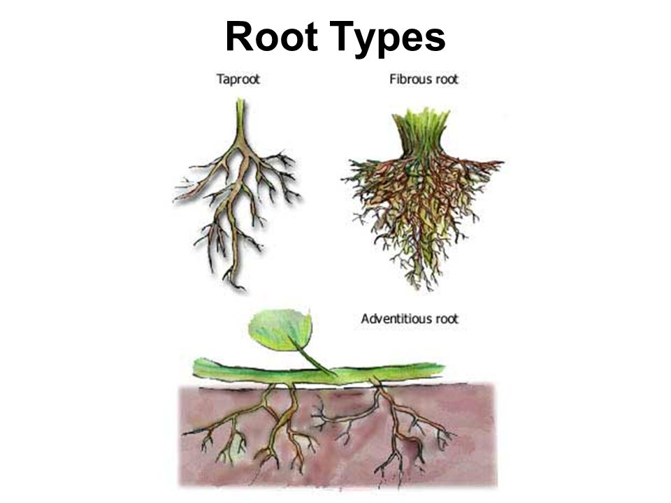 plant tissues plant structures are composed of 4 main