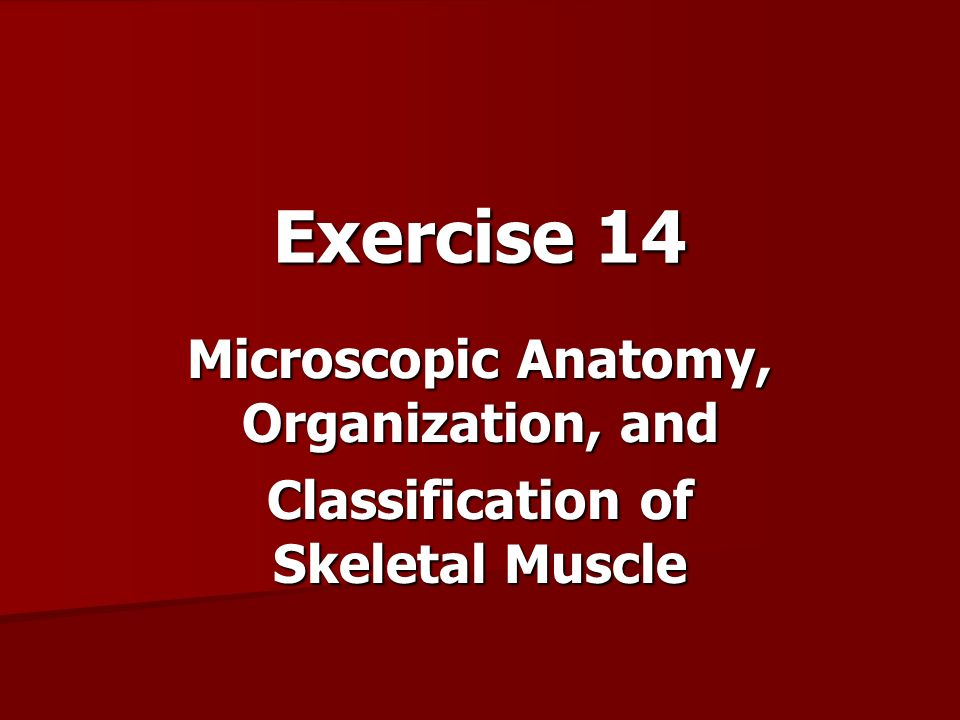 Exercise 14 Microscopic Anatomy, Organization, and - ppt video ...