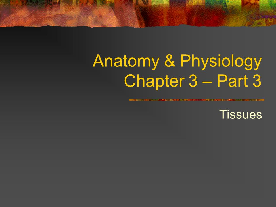 Anatomy & Physiology Chapter 3 – Part 3 - ppt video online download