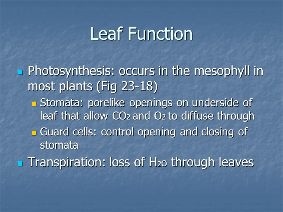 Leaf Function Photosynthesis: occurs in the mesophyll in most plants (Fig 23-18)
