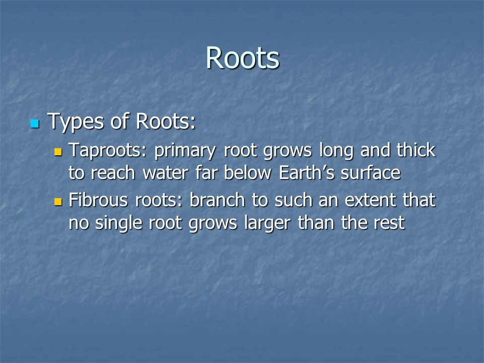 Roots Types of Roots: Taproots: primary root grows long and thick to reach water far below Earth's surface.