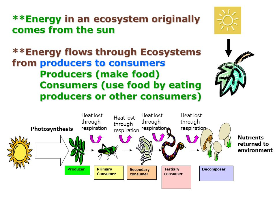 Energy Stored In Food Originally Comes From